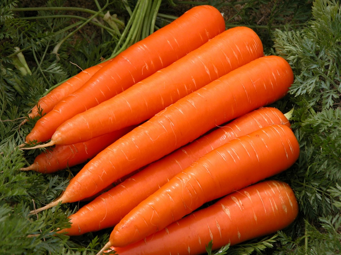 carrots-top-vegetables-natural-in-antioxidants